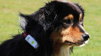 6 of the best GPS dog collars and trackers to keep tabs on your pet