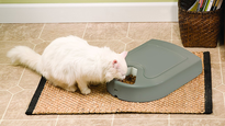 12 of the best automatic cat feeders to keep your pet fed and happy