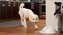 6 of the best automatic dog feeders to keep your BFF fed on time